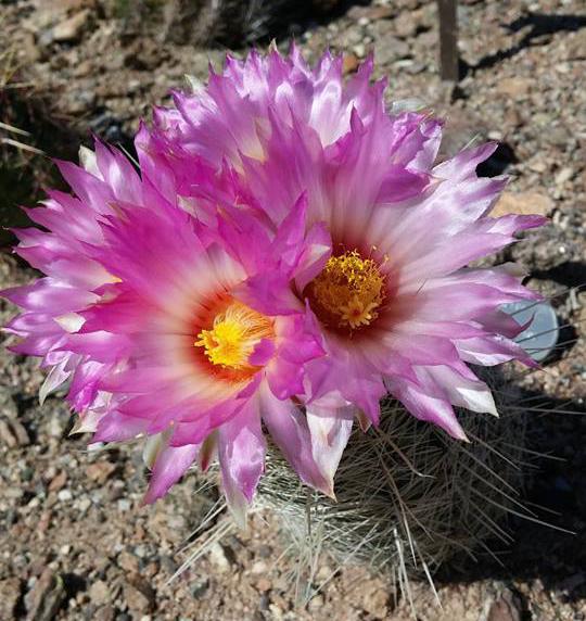 Loop Trail near Cactus & Succulent Galleries