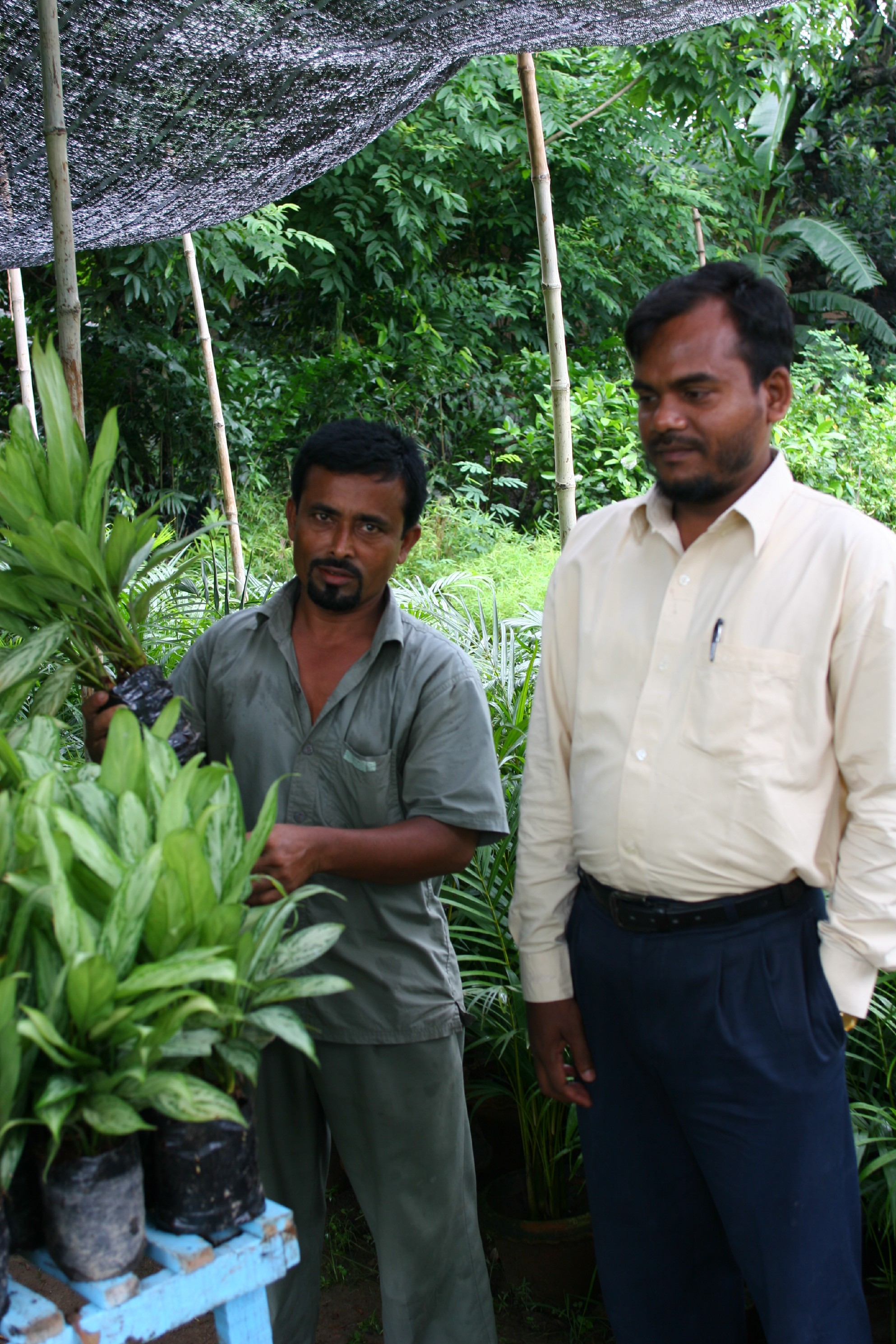Preparing soil less media for plants to export