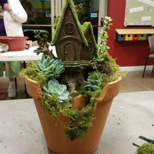 Pot and Plants
