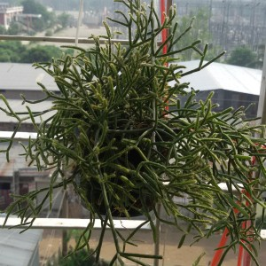 Imported Plant - 01