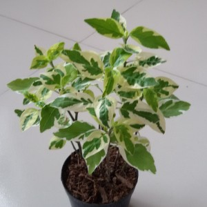 Imported Plant – 05